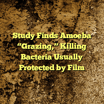 """Study Finds Amoeba """"Grazing,"""" Killing Bacteria Usually Protected by Film"""